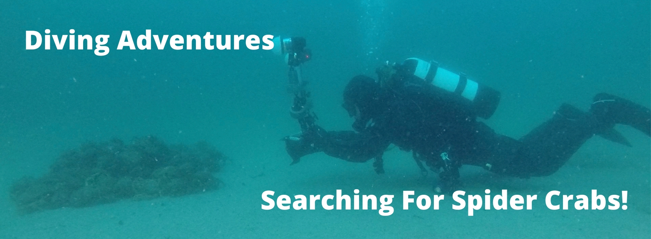 Searching For Spider Crab Aggregations